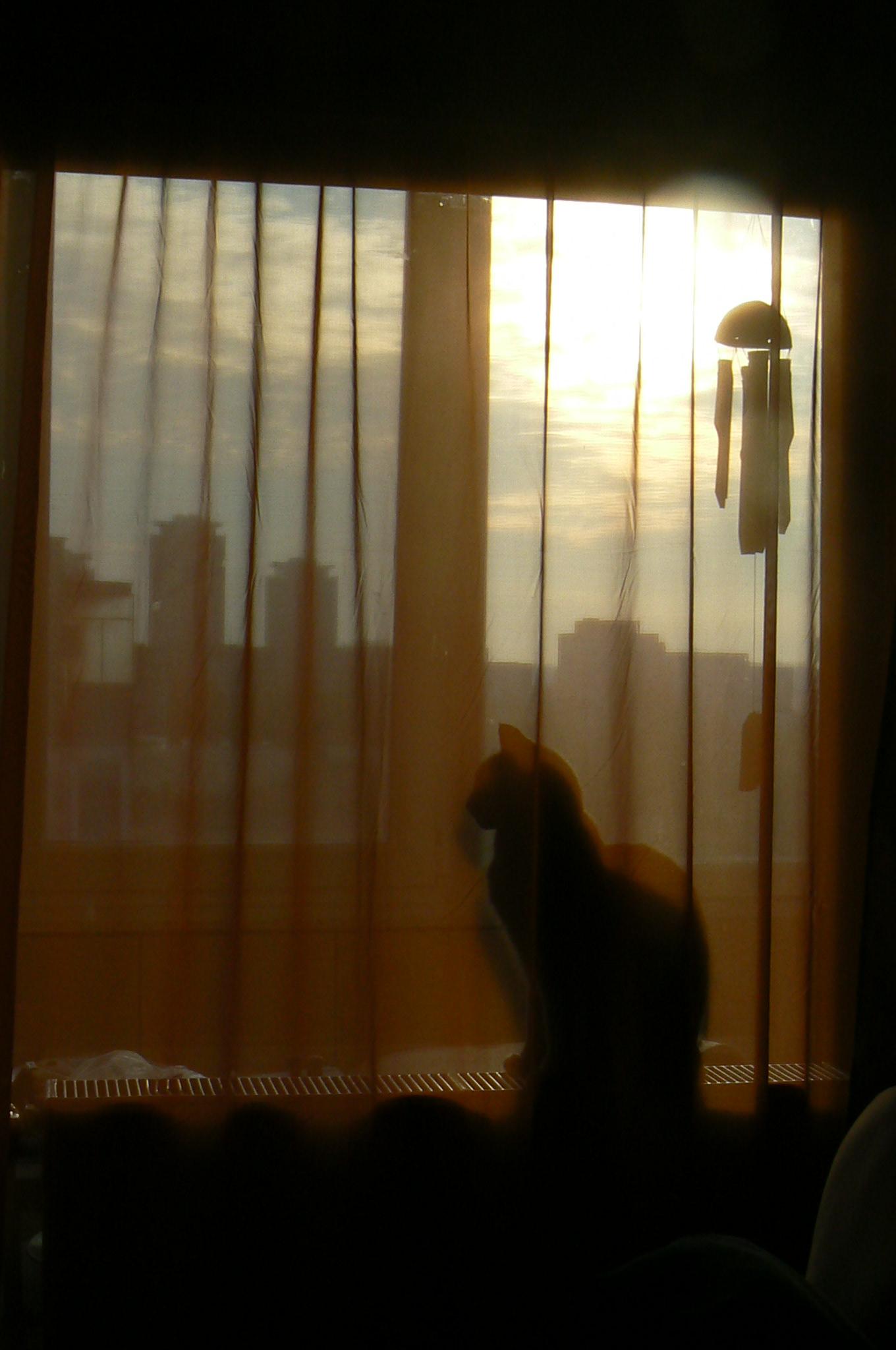 matza-in-fereastra
