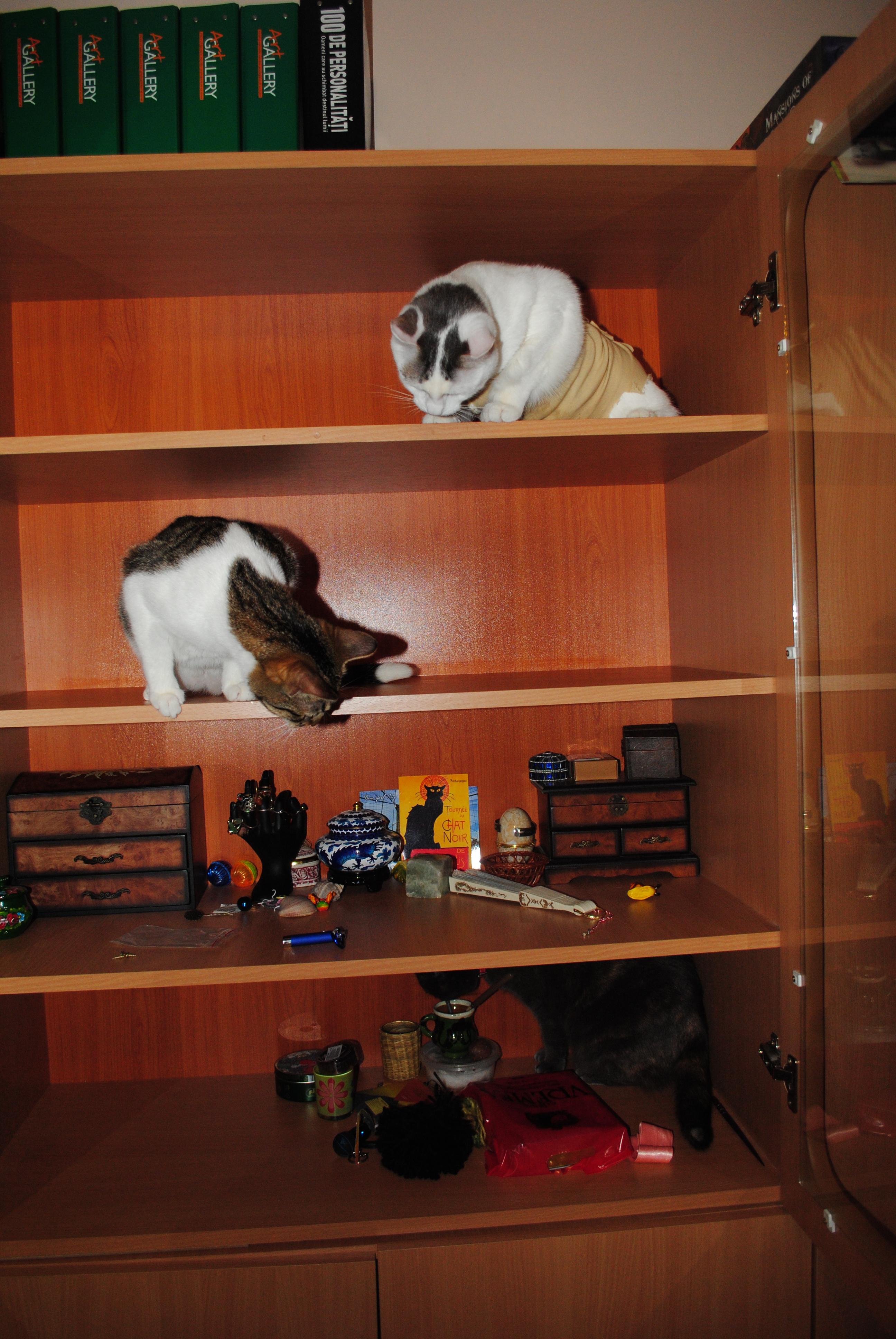 Pisici-celebre-pe-rafturi