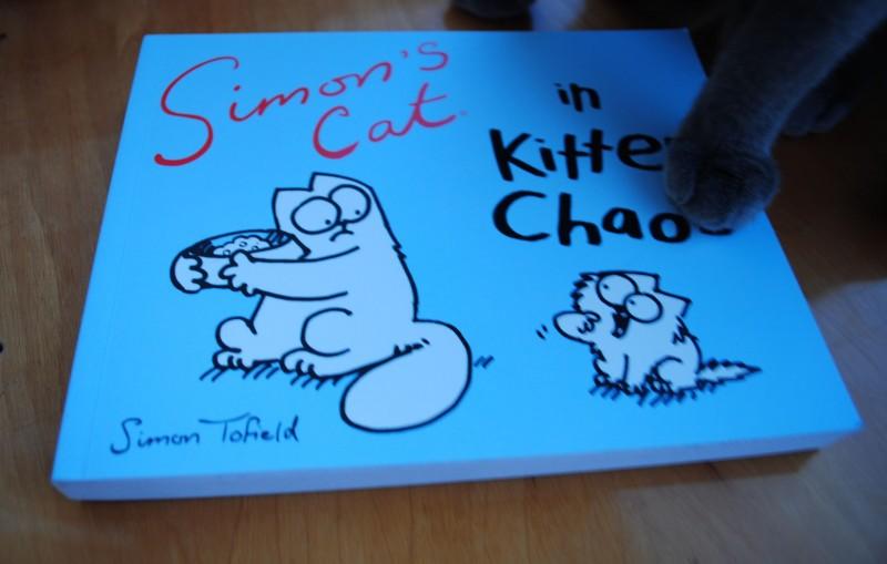 Simons-Cat-Kitten-Chaos