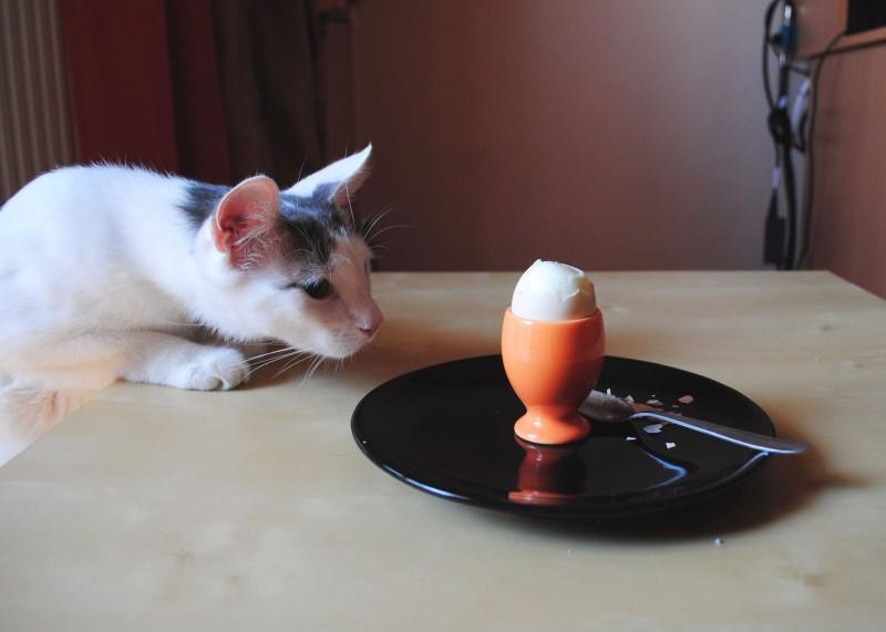 Un mic dejun perfect cu ou fiert si Mioja