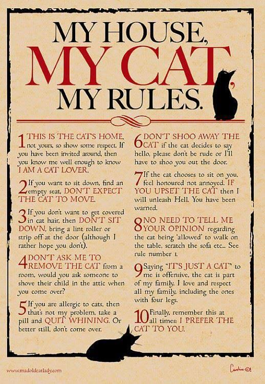 Dragă musafirule, nişte reguli pentru tine
