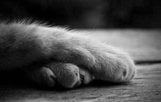 pisica_4