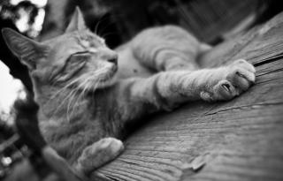 pisica_5